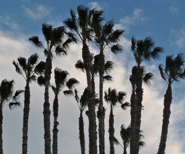 palmeral-marrakech